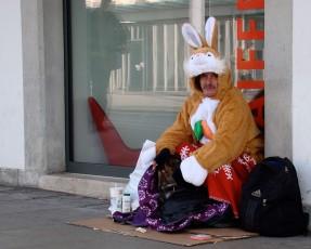 Marcia Abreu - bunny