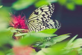 Eren Dastemir - The Butterfly