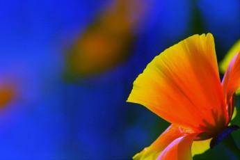 Richard Powles Brown - Flowers